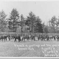 Lovell Farm, Etc.: Horses.