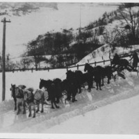 Snow Grader. Nine Horse Hitch