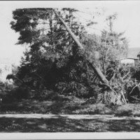 Hurricane: 9/21/1938: Williams Terrace. Lynch Residence.