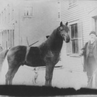 "Livestock: Horse ""Carmont"" held by L.T. Lovell."