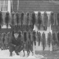 Saul Hewey, Hunter. Coon dog and pelts.