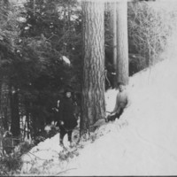 Tree Cutting. Henry H. Porter. And Mrs. Frank Kendall.